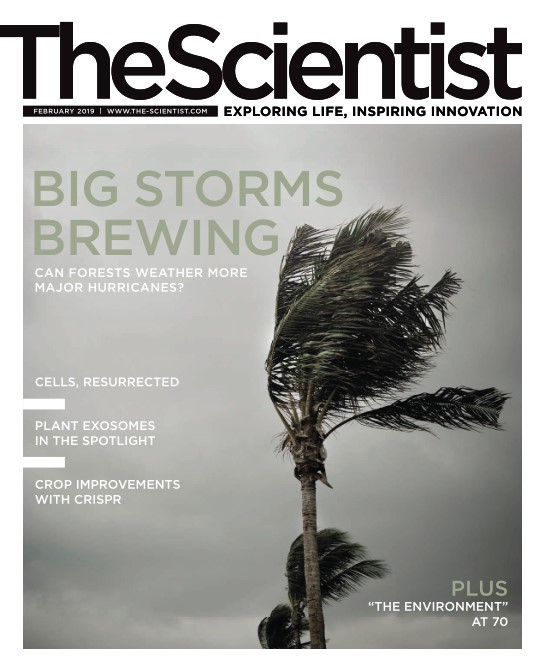 The Scientist - February 2019
