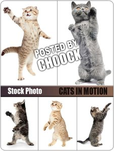 Stock Photo: Cats in motion