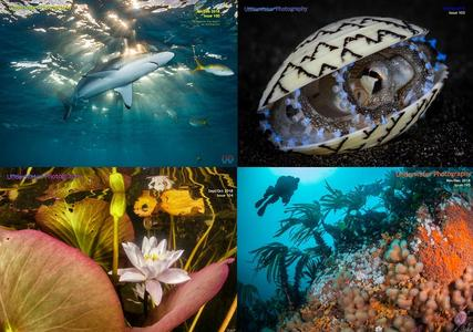 Underwater Photography 2018 Full Year Collection