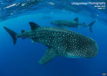 Underwater Photography - November-December 2019