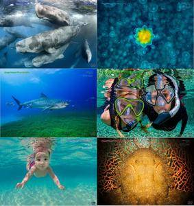 Underwater Photography - 2017 Full Year Issues Collection