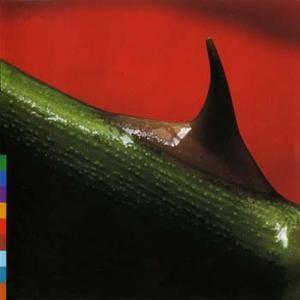 Nusrat Fateh Ali Khan & Michael Brook - Night Song (1996) REPOST