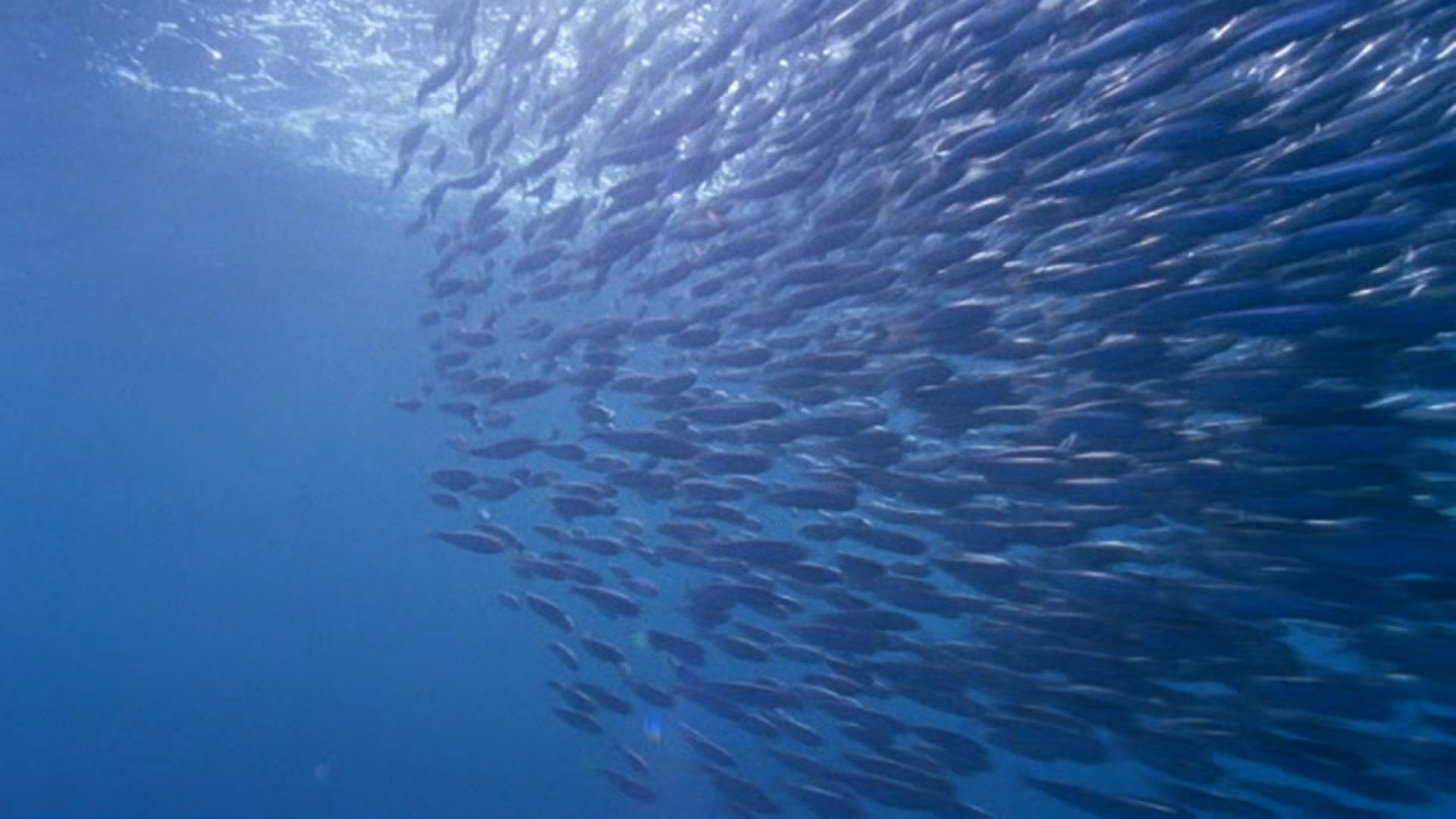 BBC Earth: The Blue Planet: Seas of Life (2001)