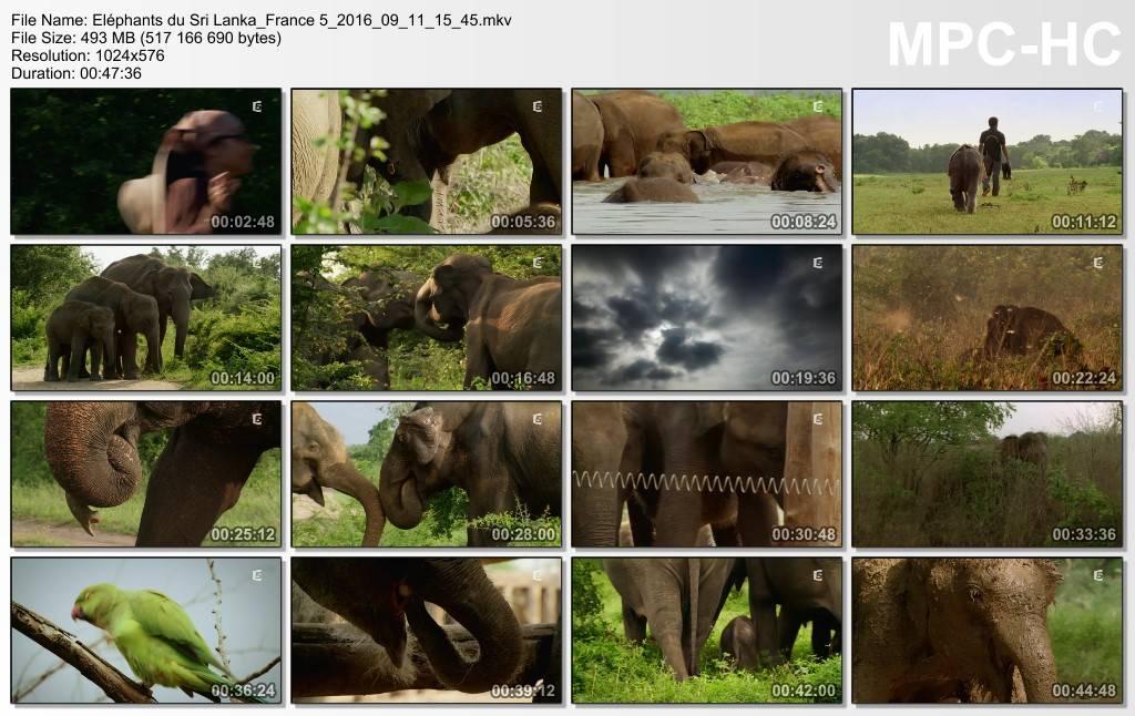 (Fr5) Eléphants du Sri Lanka (2016)
