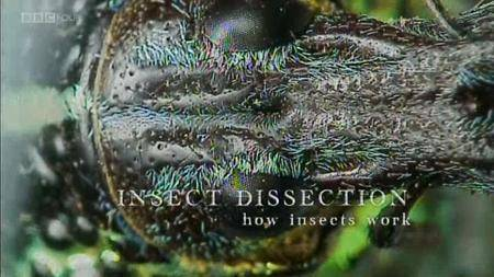 BBC - Insect Dissection: How Insects Work (2013)