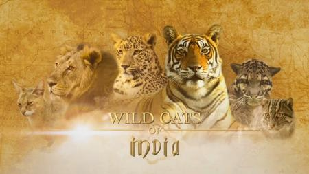 NG. - Wild Cats of India: Masters of Disguise (2019)
