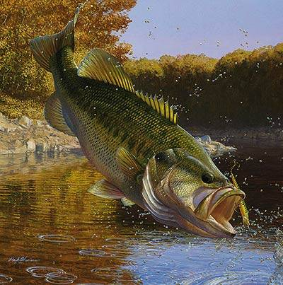 Mark Susinno Paintings