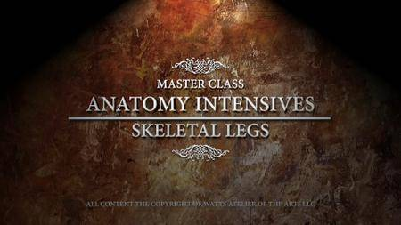 Anatomy: Arms & Legs
