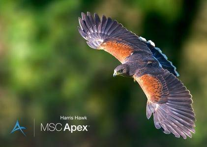 MSC Apex Harris Hawk SP1