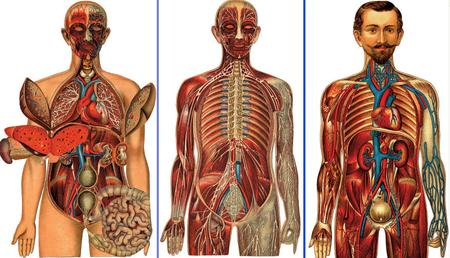 Pepin Press: Images of the Human Body
