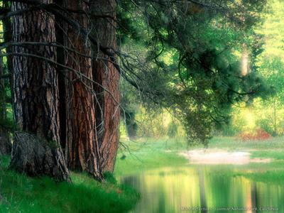 Extraordinary High resolution  Images Of Nature P4