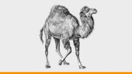 Perl for Beginners: Learn A to Z of Perl Scripting Hands-on