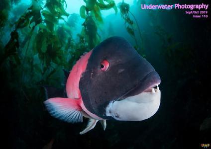 Underwater Photography - September-October 2019