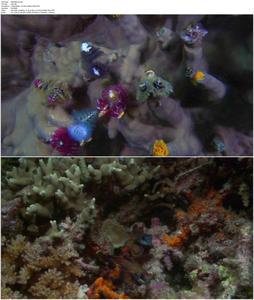 Coral Sea Dreaming: Awaken (2010)