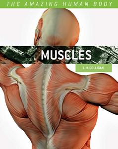 Muscles (The Amazing Human Body)