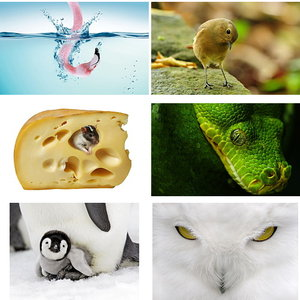 Wallpapers Animals. Set 13