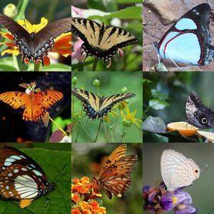 Butterflies Wallpapers 3