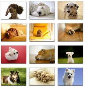 Datacraft Sozaijiten Vol. 159 Dogs