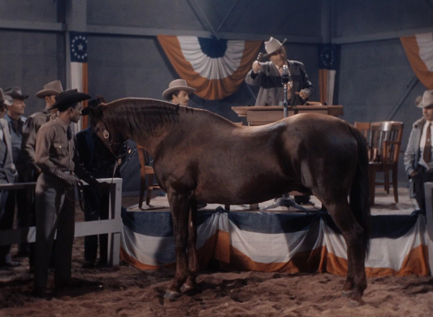 Trigger, Jr. (1950)