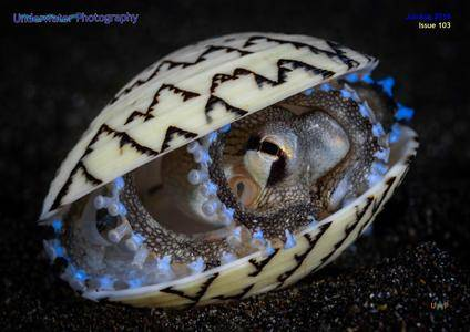 Underwater Photography - July/August 2018