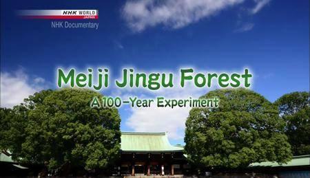 NHK - Meiji Jingu Forest: A 100-Year Experiment (2015) [Repost]