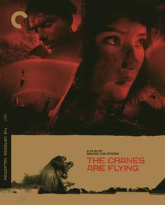 Letyat zhuravli / The Cranes Are Flying / Летят журавли (1957) [Criterion Collection]