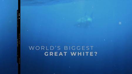World's Biggest Great White? (2019)