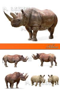 Rhino photos