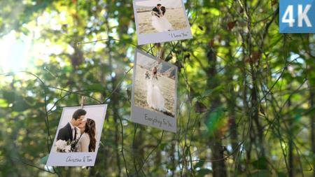 Photo Memories on Trees - Project for After Effects (VideoHive)