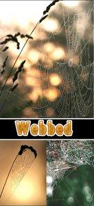 Textures - Webbed