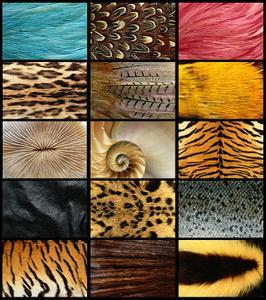 Animal Patterns Wallpapers
