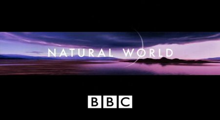 BBC Natural World The Cat Connection