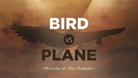 Smithsonian Ch. - Bird vs. Plane: Miracle on the Hudson (2018)