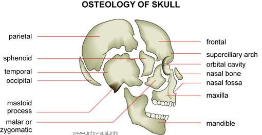 Atlas of Morphology by Platronix Multimedia
