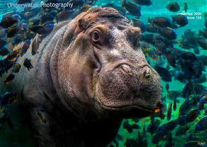 Underwater Photography - March-April 2020