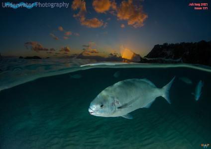 Underwater Photography - July-August 2021