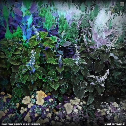 Murmuration Meditation - Lucid Dreams (2018)