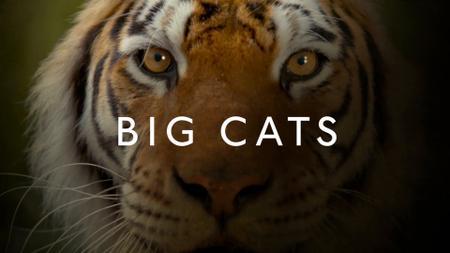 BBC - Big Cats: Series 1 (2018)