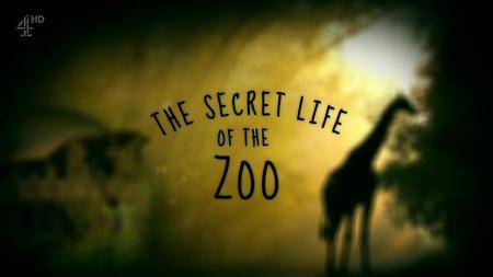 Channel 4 - The Secret Life of the Zoo (2016)