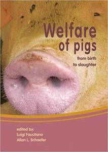 Welfare Of Pigs: From Birth to Slaughter