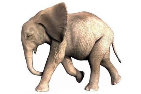 African Baby Elephant