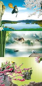 Nature & birds
