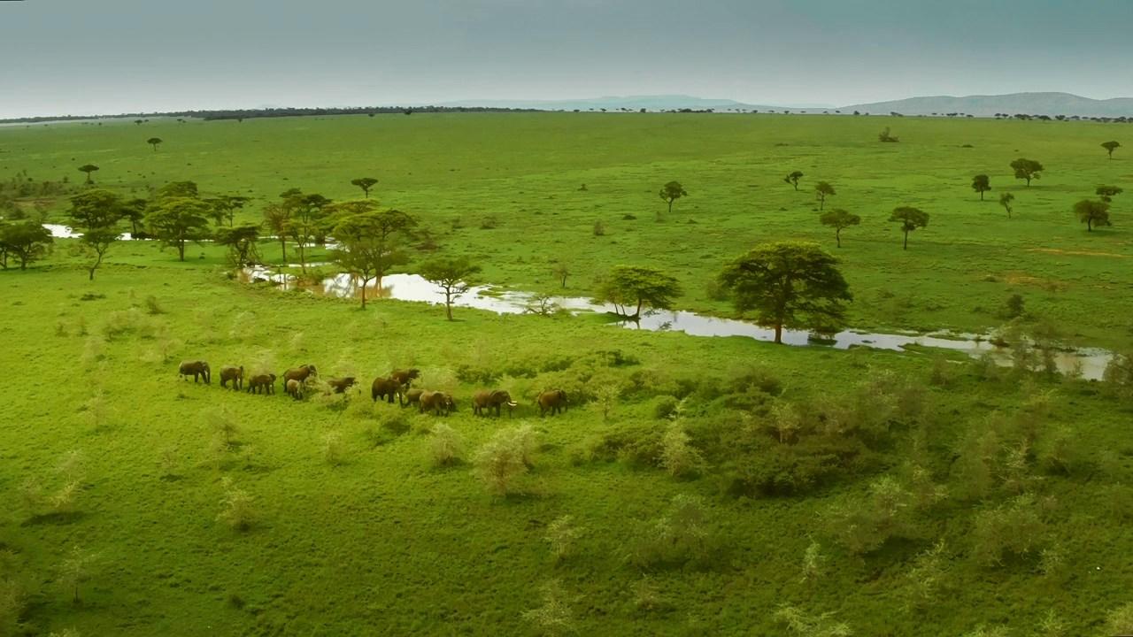 Serengeti (2019) [Complete Season 1]