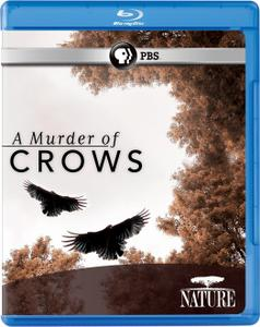 A Murder of Crows (2010)
