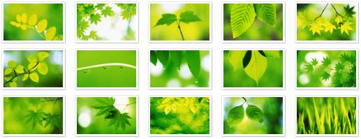HQ Wallpaper Collection 07: Green Leaves Widescreen (40 pix)