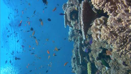 HDScape - Ocean Aquarium (2008)
