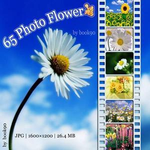 65 Photo Flower