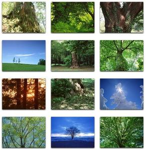 Datacraft Sozaijiten Vol. 76 Trees Full of Life