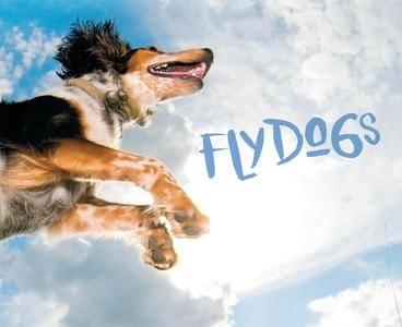 Flydogs (repost)