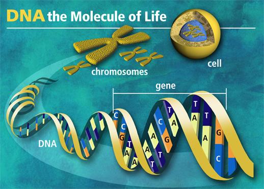 Medical Molecular Biology & Genetics